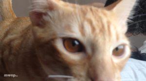 Cato cat